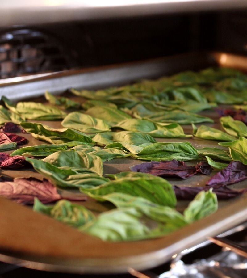 Image of basil leaves on a baking sheet in the oven  | Mama on the Homestead