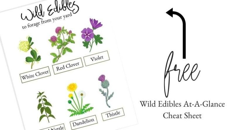 Wild Edibles Cheat Sheet | Mama on the Homestead
