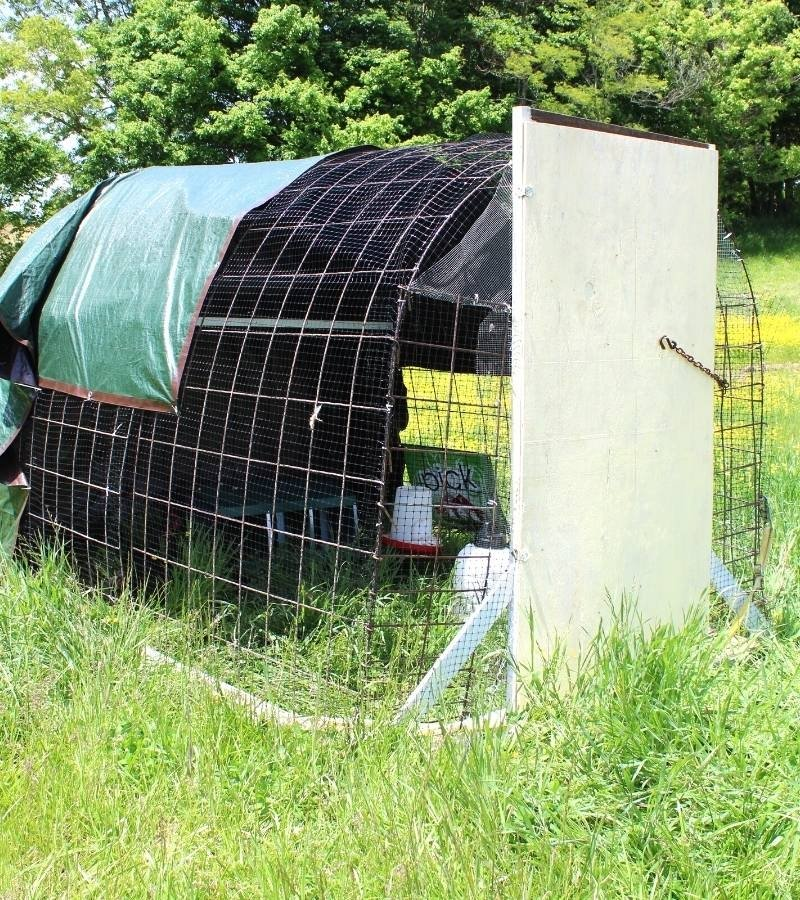Chicken Coop made with cattle panels | Mama on the Homestead