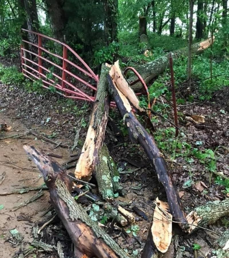 Tree fallen on a gate | Mama on the Homestead