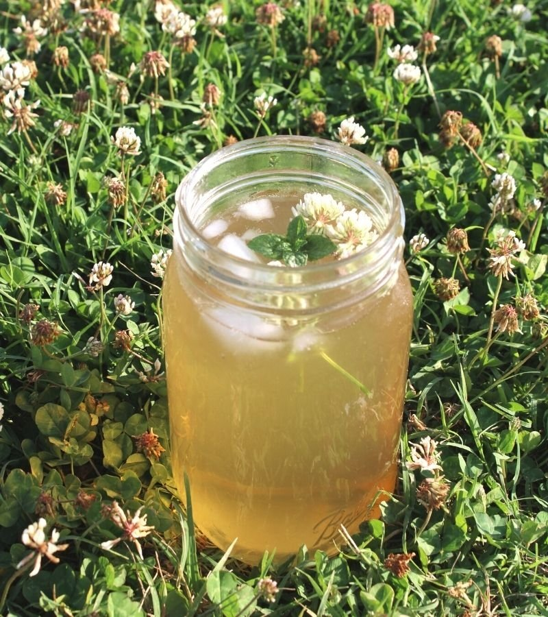 White Clover Iced Tea Recipe with Fresh Mint and Honey in a mason jar in a patch of clover | Mama on the Homestead